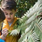 Familienauszeit Neuseeland - Farn