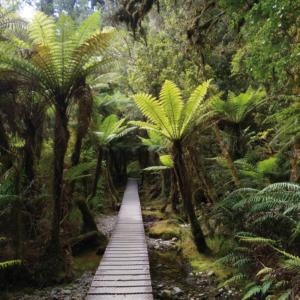 Familienauszeit Neuseeland - Regenwald